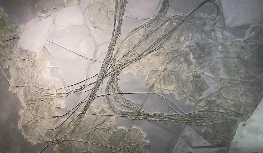 Wand fossile Blüten