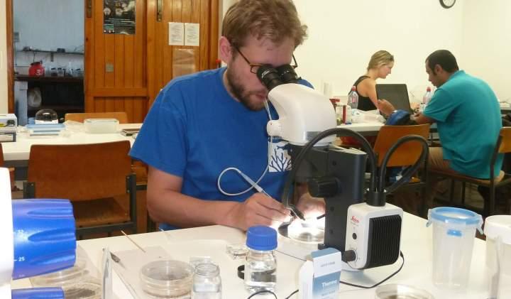 Dr. Alexander Kieneke auf Elba