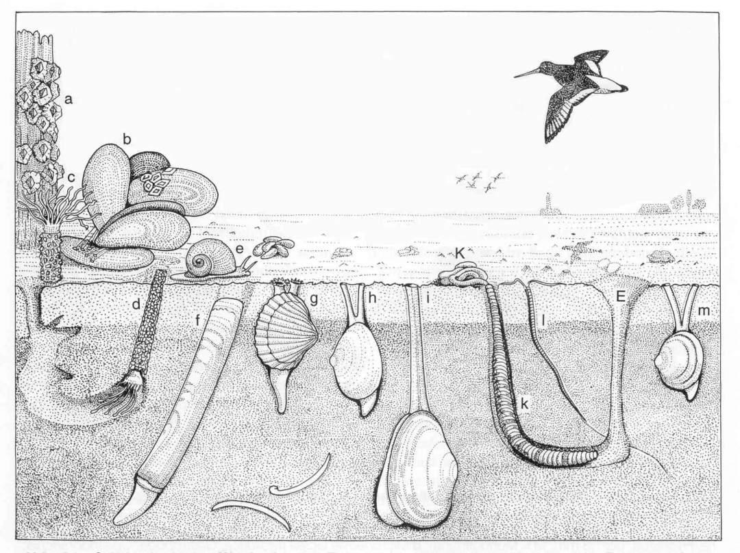 FB Meeresbiologie Bilder