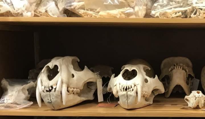Görlitz Zoologie Sammlung