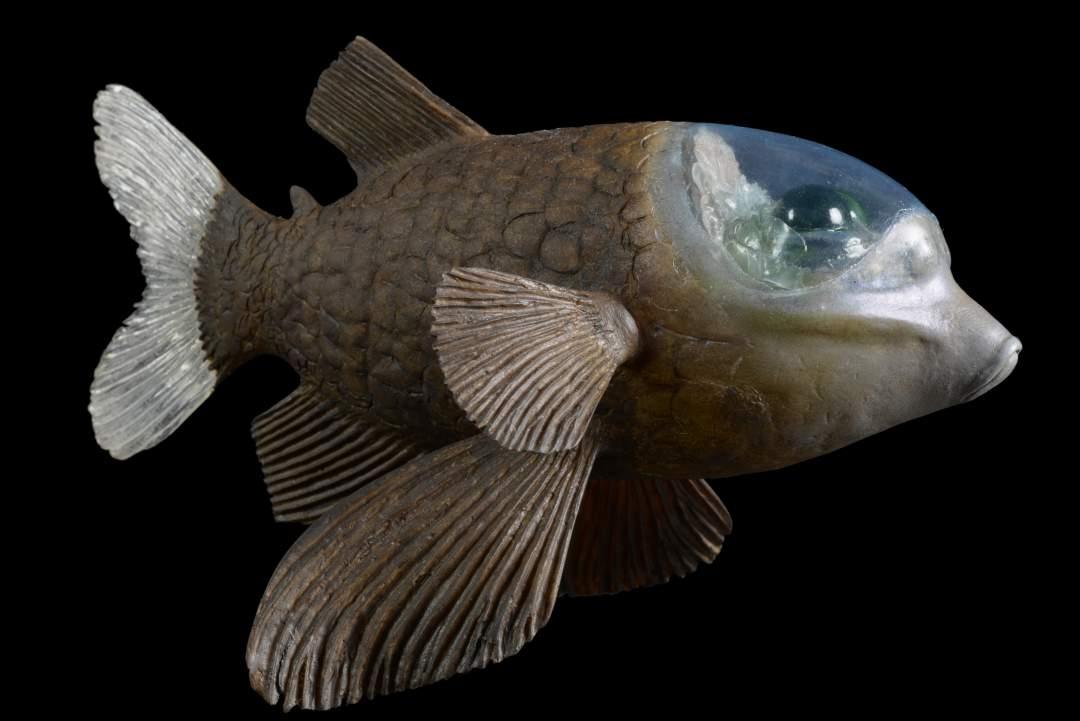 Glaskopffisch
