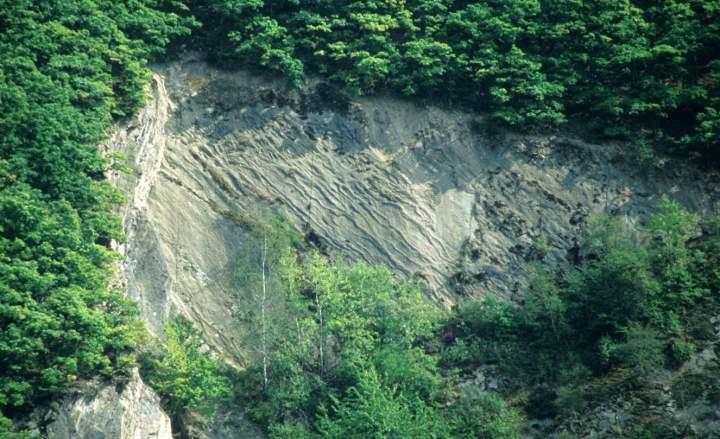 Schichtunterseite einer Bank aus dem hohen Unter-Emsium (Unter-Devon) in einem Steinbruch im Mosel-Gebiet.