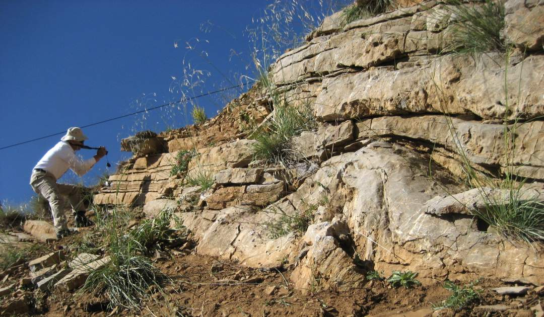 Stromatoporen-Riff