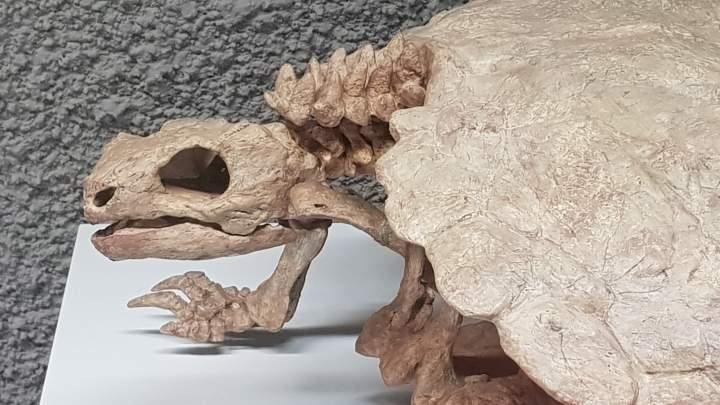 pm Schildkröte 7.4.2020