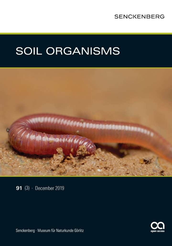 Juveline earthworm (Lumbricidae)