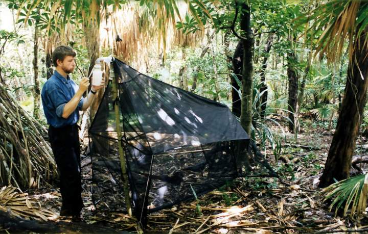 SDEI Diptera Section, Malaise trap in tropical forest.