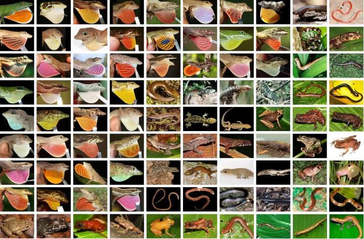 Einige der von Köhler et al. neu beschriebenen Amphibien- und Reptilienarten