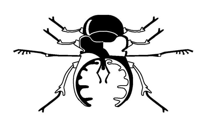 Logo SDEI Kustodiat Coleoptera