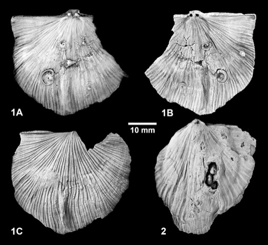 Paläozoologie III Bilder