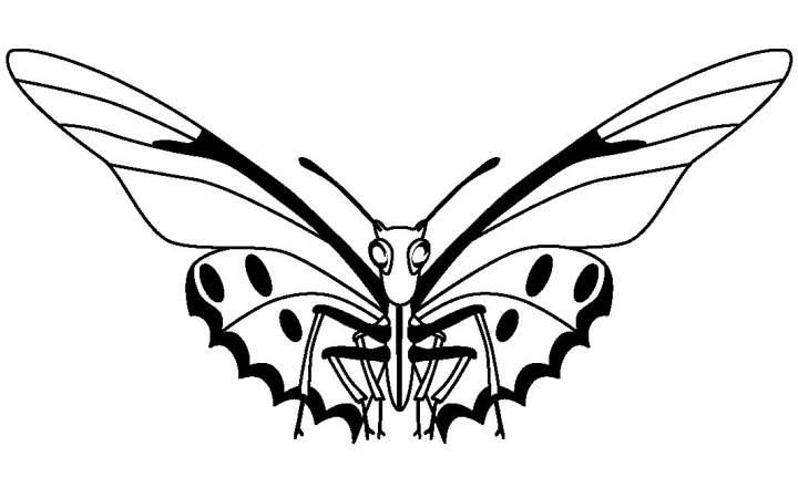 SDEI Kustodiat Lepidoptera Logo