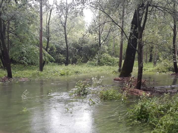Waldklimafond Auwald