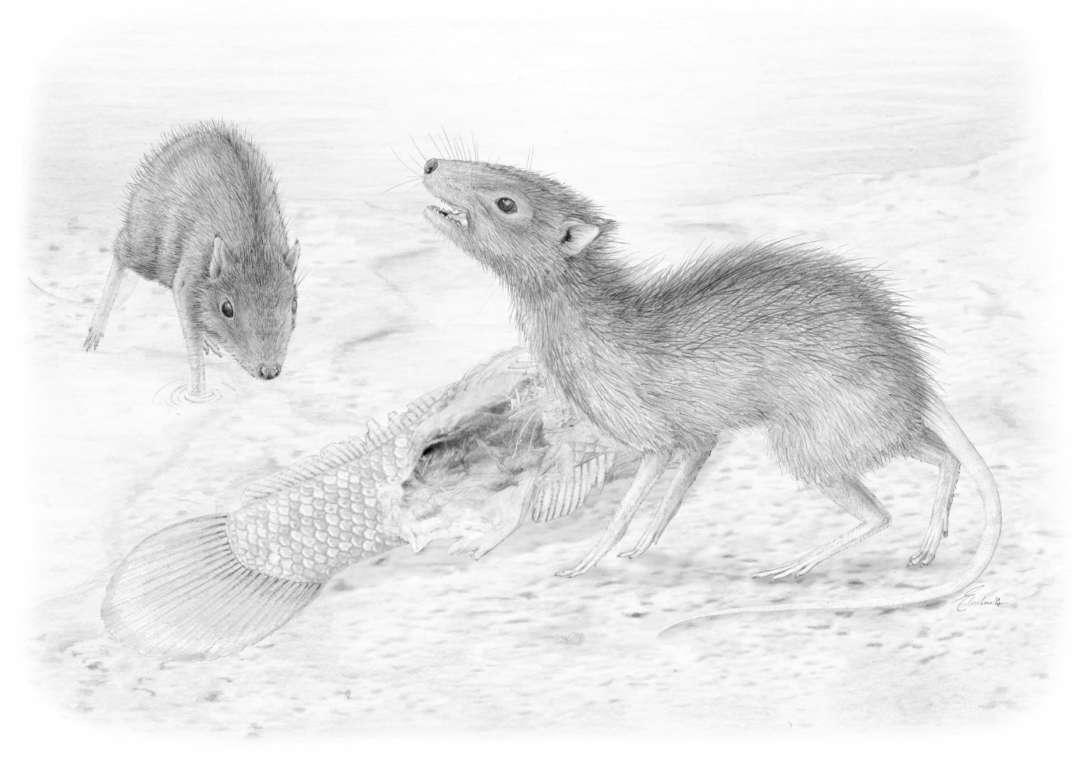 Über den Tod hinaus – Entdeckung und Präparation eines Fossils aus der Grube Messel