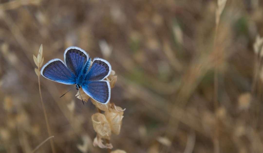Blume Schmetterling