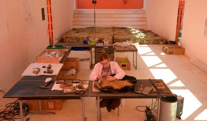 Edmonds Urzeitreich - Eine Dinograbung in Frankfurt