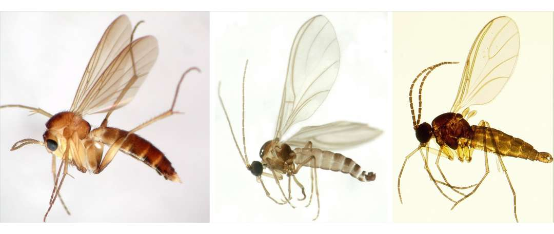 SDEI Sektion Diptera Projekte