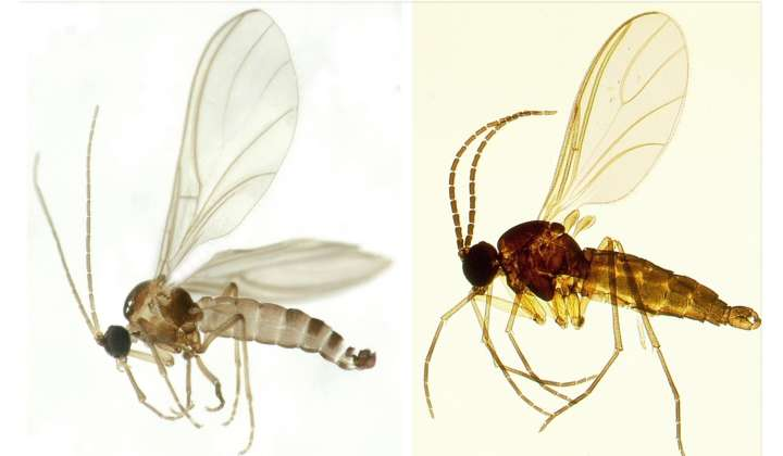 SDEI Sektion Diptera: Forschung
