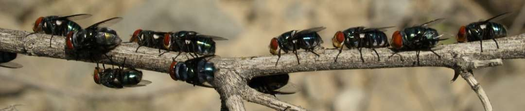 SDEI Sektion Diptera: Sammlungsmaterial