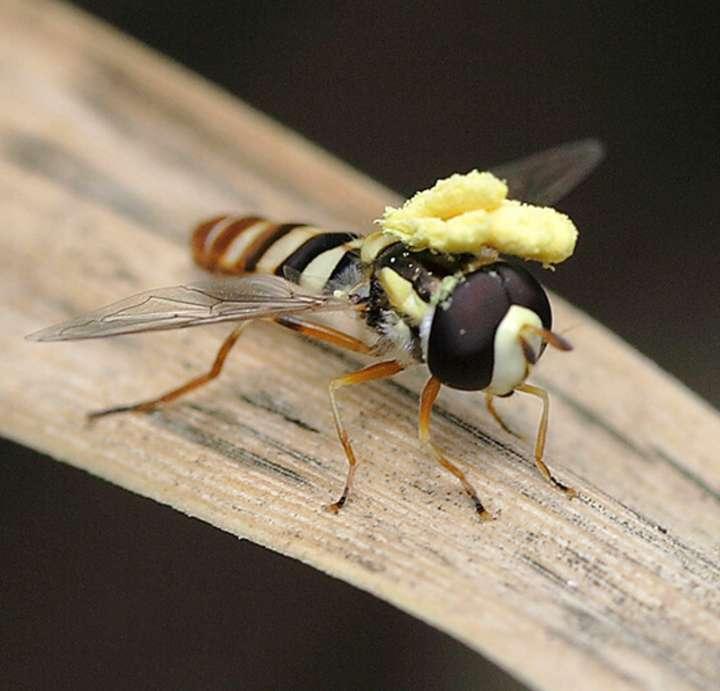 SDEI Sektion Diptera Sammlung