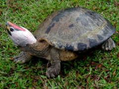 pm aussterben schildkröte 23.6.2020