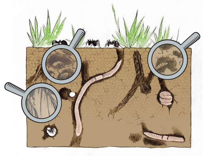 Bodenzoologie Modell Quader Mättig