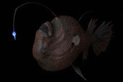 Pressefotos Tiefsee Meeresforschung