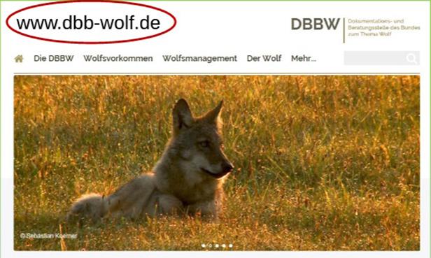 Wolfsbild von der DBBW-Webseite
