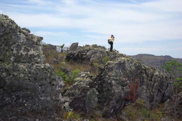 Botanik SF: Geländearbeit in Brasilien
