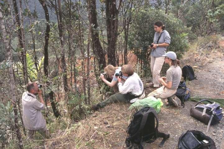 Botanik SF: Geländearbeit in Südamerika (fotogene Marcgravia)