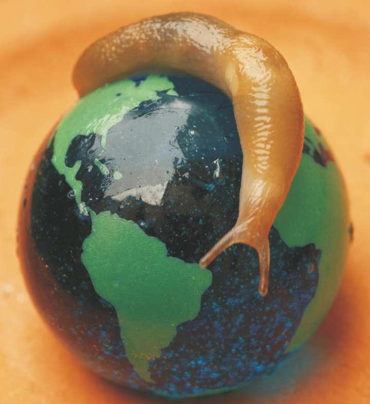 Slug on a globe