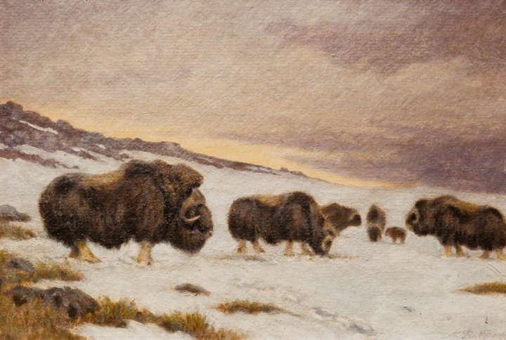 Moschusochsenherde im Schnee auf einem Gemälde von C. C. Flerov