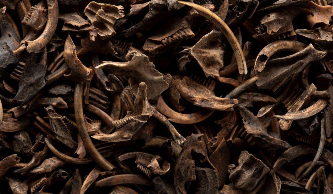 Ansammlung von fossilen Kleinsäugerknochen der Abteilung Quartärpaläontologie Weimar