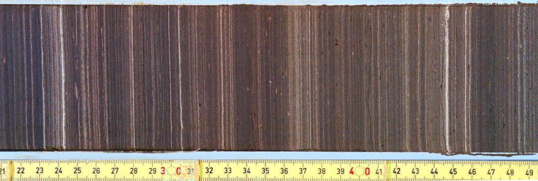 Quartäre Mikrofloren Weimar laminiertes Sediment