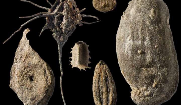 Pflanzenfossilien aus frühpleistozänen Seeablagerungen bei Voigtstedt/ Hackelsberg in Thüringen
