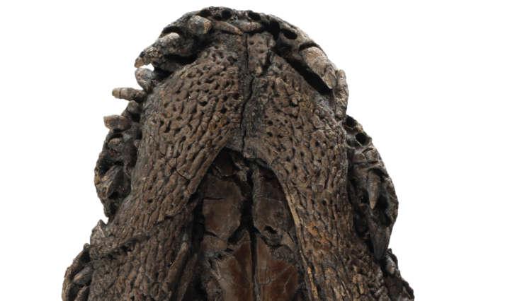 PM Krokodil 8.1.2020