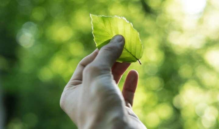 Stockfoto Nachhaltigkeit