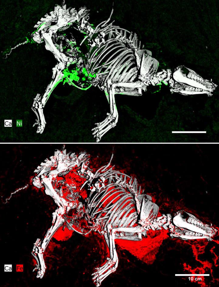 Urpferdchenstute Radiologie
