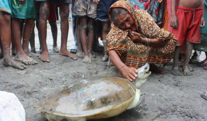 Batagur Schildkröte Weibchen mit Frau