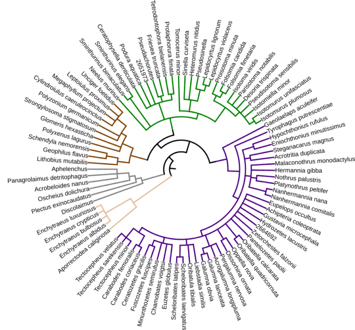 Bodenzoologie Metagenomik Grafik