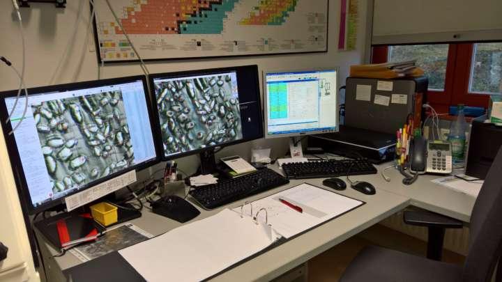 Rasterelektronenmikroskop (REM) der SNSD