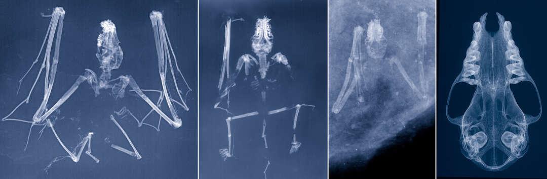 Sammlung Radiologie
