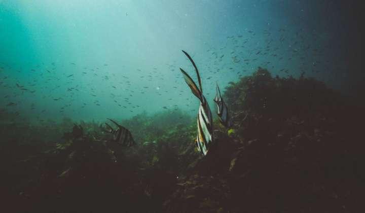 Stockfoto Meeresboden