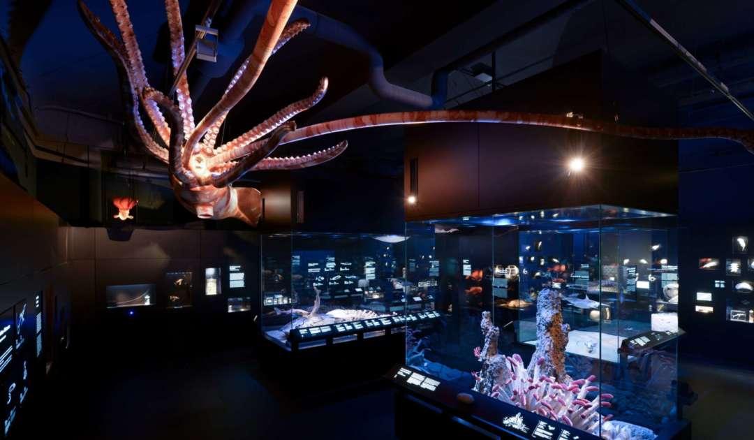 Tiefsee und Meeresforschung Ausstellung