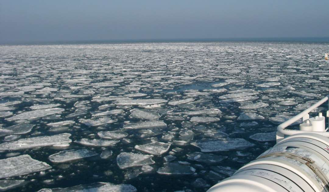 Zooplankton Pic11_Baltic_Sea