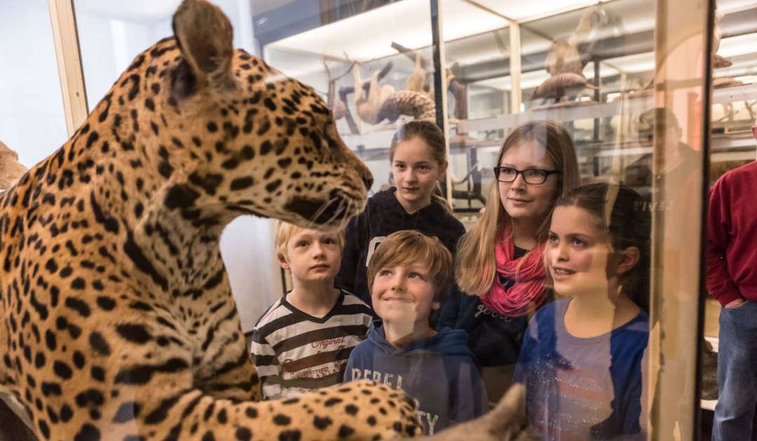 Jaguar und Kinder