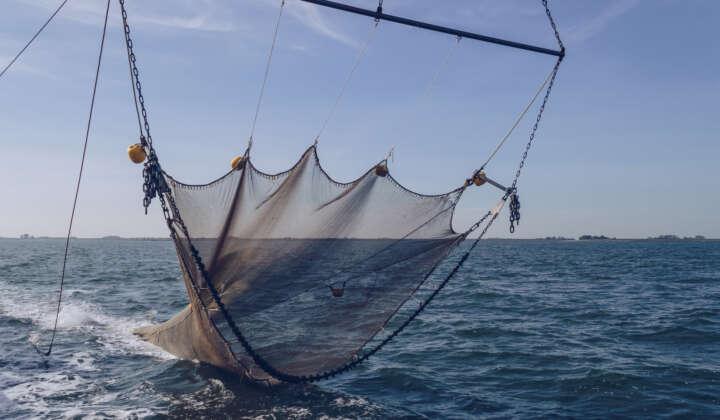 Industriefischerei
