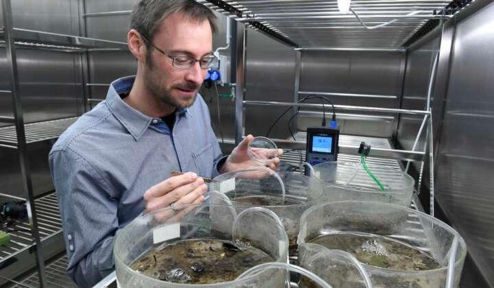 Entomologie III Steffen Pauls