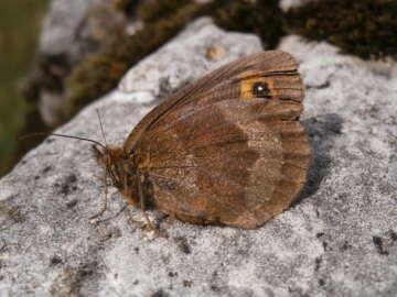 pm Schmetterling als Waldanzeiger 12.01.2021