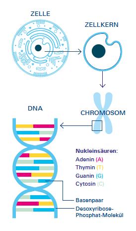 NFM Januar Genom