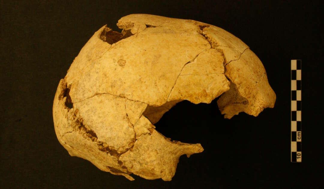 Serinya-Fossilien