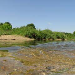 Fließgewässerökologie und Naturschutzforschung